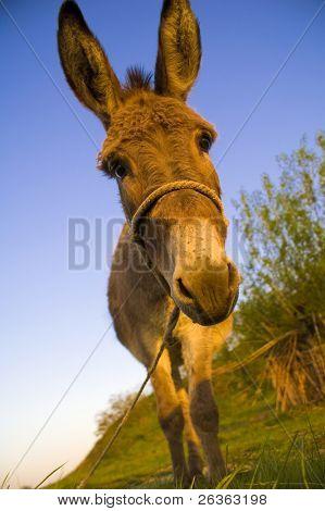 donkey in a farmland