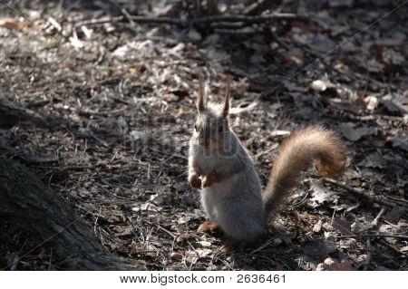Gimme A Nut