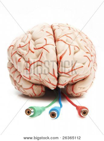 anatomically correct rubber model of the human brain, brain ready to be pluged