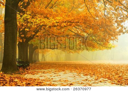 Beautiful autumn colors