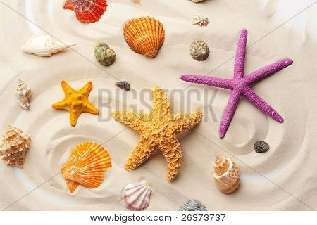 colorful seashells and starfishes on the sand; summer background