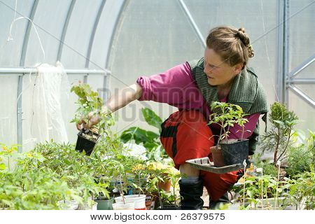 One adult woman is working in a greenhouse with seedlings.
