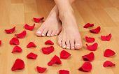 Постер, плакат: Ноги и красные лепестки роз