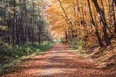 Trail In Autumn Forest, Inspiration Autumn Nature Background poster