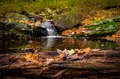 Peaceful Autumn River Waterfall With Golden Leafs poster