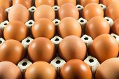 Fresh Eggs From The Farm In The Panel White Paper. poster