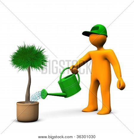 Gardener Watering Palm