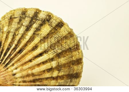 Shell On White