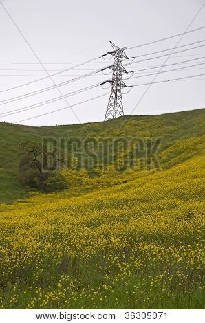 Mustard Field And Power Transmission Tower