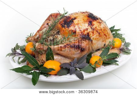 Roasted Turkey On White