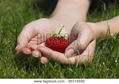 Appetizing Strawberry In Hands