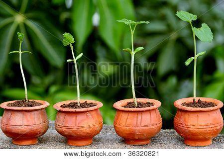 Progreso de la planta