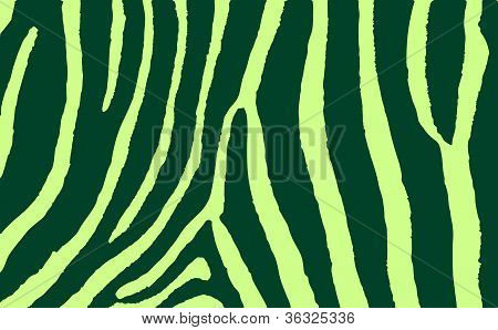 Colorful Animal Skin Textures Of Zebra. Vector Illustration Wild Pattern, Eps 10