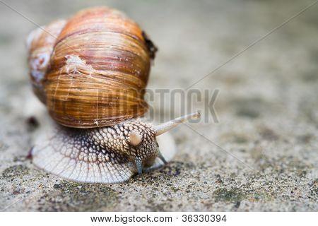 Rastreos de caracoles