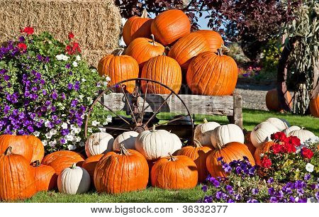 White And Orange Pumpkin Fall Still Life