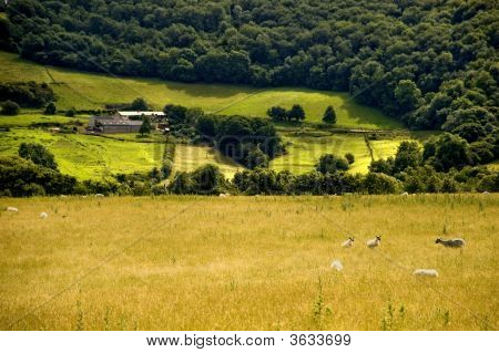 Countryside Hills