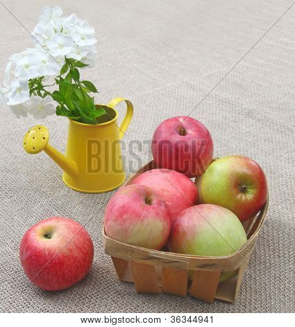 Basket Of Apples And White Phloxes On A Canvas Background