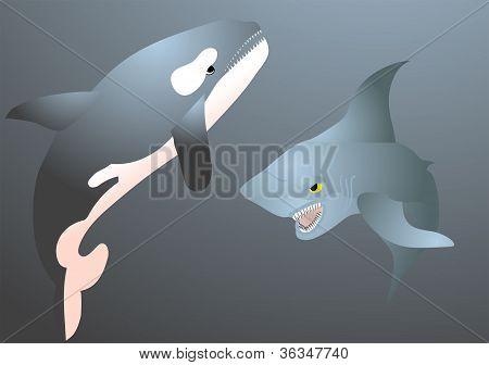 Orca y el tiburón