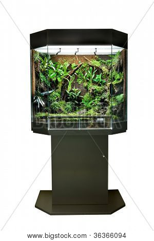 terrarium or vivarium for keeping rainforest animal such as poison frog and lizards. Glass habitat pet tank with green moss and jungle vegetation. Tropical cage.