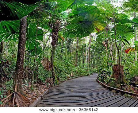 trail in fan palm tropical rain forest Cape Tribulation Australia, Daintree rainforest, ancient jungle tourism and travel explore the wilderness