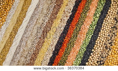 colorful striped rows of dry lentils, soya beans, grain , peas, groats , buckwheat, soybeans, legumes, rice, backdrop