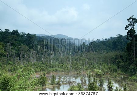 flooding causing death of the water-logged trees in a tropical rainforest