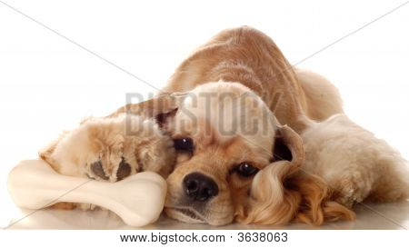 Cocker Spaniel With Dog Bone