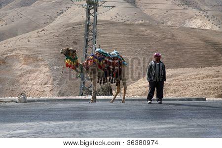 JERICHO , ISRAEL - JANUARY 01: Unidentified Bedouin man wait tourist near his dromedary in Jericho, Israel on January 01, 2008. Many Bedouin men work as guides for day-trips in the Judea desert.