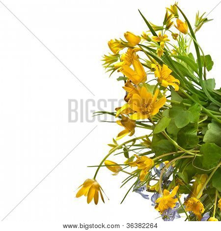 Border of wild flowers on a white background