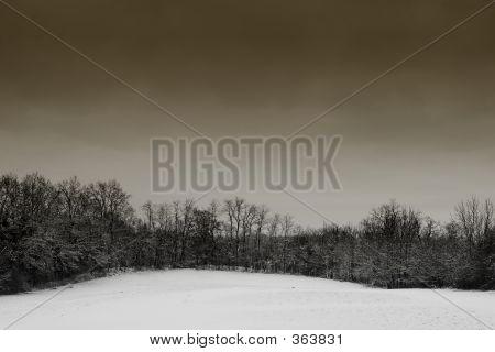 Snow Landscape #1