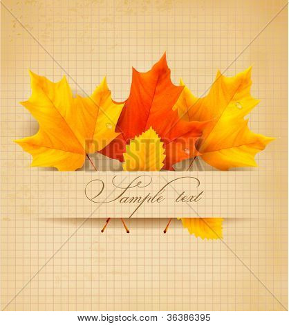 Colorful autumn leaves on a old paper. Back to school background. Vector.