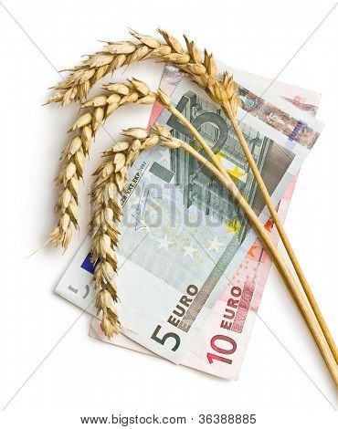 wheat ears with euro money on white background