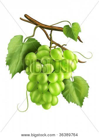 White grapes with some branches and leaves. Digital illustration.