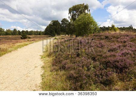 Footpath through heath landscape at Lower Saxony