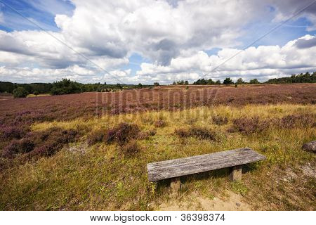 landscape at the Lueneburger Heath nature park in northern Germany, old wooden bench in foreground