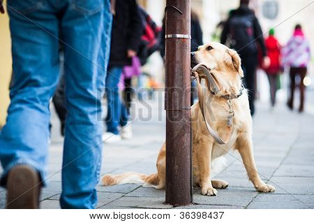 Cute dog waiting patiently for his master on a city street