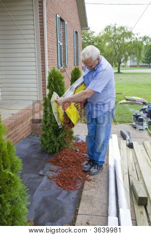 Landscaper Planting Trees