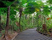 trail in fan palm tropical rain forest Cape Tribulation Australia, Daintree rainforest, ancient jung