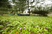 old fishing boats in a garden of flowering shrubs poster