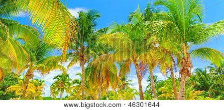 Beautiful tropical island background, fresh palm trees, luxury beach resort, scenic landscape, exotic nature, summer holidays and vacation concept
