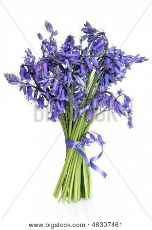 Bluebell flower posy over white background.