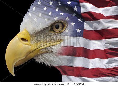 Águia patriótica