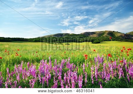 Spring meadow in meadow. Beautiful landscapes.