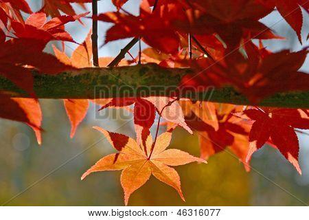 Autumn Bough