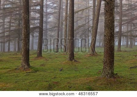 European Larch Forest
