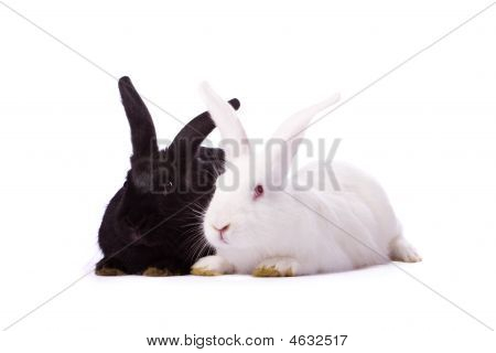 Black Rabbit And White Rabbit