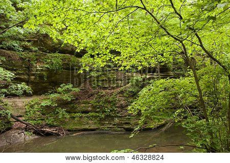 springtime in state park