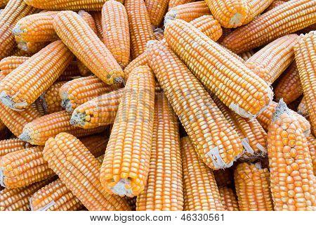 Yellow Dried Corn