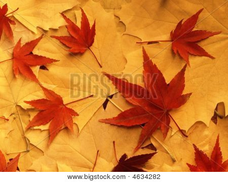 Bright Colorful Autumn Leaves