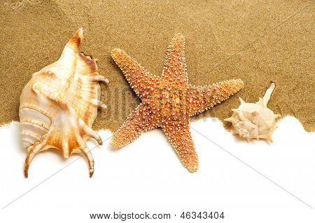 some conch shells and a starfish on the sand, on a white background with a blank space to write your text
